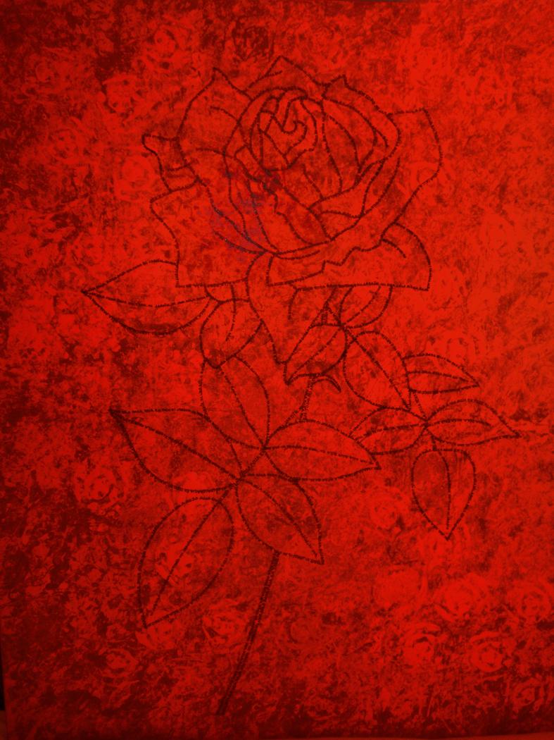 Ni una sola rosa roja en todo mi jardín